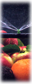 fruit_sprinkler